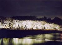 対岸の桜をライトアップ