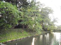 新田目城の堀跡